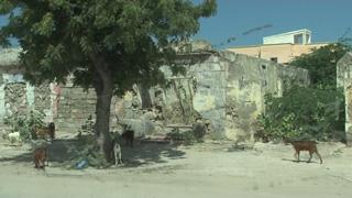 mogadishu_goats.jpg
